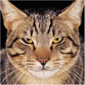 Cats have often been used to describe SMEs - independent and impossible to control...but still lovable.